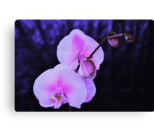 Seductive Orchid Canvas Print