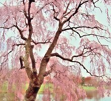 Meet Me Under The Pink Blooms Beside The Pond by AngieM