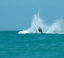 The Splash - Whale Breaching 03 by serendip