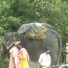 Elephant by the roadside  by Ravs
