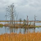 Marsh Storm by Charlie