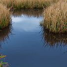 Overcast Marsh by Charlie