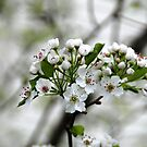 Blossom Flowers by Vonnie Murfin