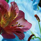 Lilies Greetings Card by DExPIX