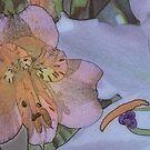 Lily Nouveau by DExPIX