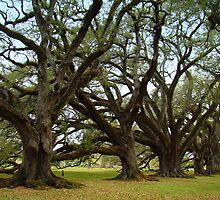 Oak Alley Plantation Beautiful Oak Trees by Wanda Raines