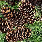 Pine Cones by LeftHandPrints