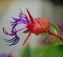 Colorful Bud by Alan Brazzel