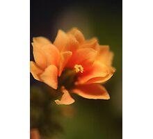 In-door flower Photographic Print