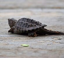 Snapping Turtle by Michele Markley