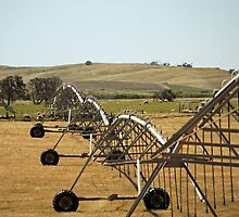 Centre Pivot Irrigation, Mt Benson by Fiona Boundy