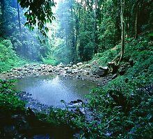 Crystal Shower Falls - Dorrigo National Park NSW, by graphicscapes