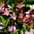 Bee in the Blossoms by Alan Brazzel