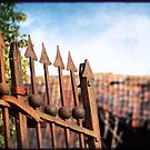 Old fence on it's last days. by Michel Raj