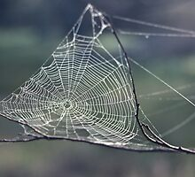 198208140003 Spiders web Toodyay by Fred Mitchell