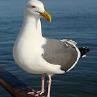 Big Bird by DavePlatt