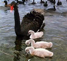 Black Swan Family  by Guyzimij