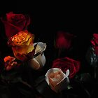 all kinds of roses by pdsfotoart