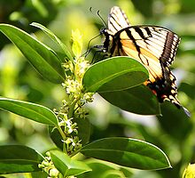 First Butterfly Sighting by Peggy Berger