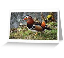 What great colours! Greeting Card