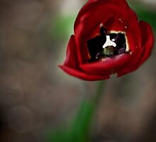 April's Bloom by The Jonathan Sloat