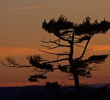 Silhouettes At Dusk by Atlantic Dreams