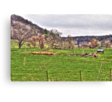 Lonely Pasture Canvas Print