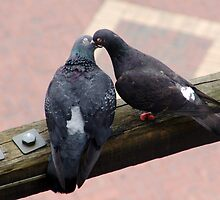 Love birds by Dentanarts