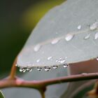 Rain on Gum leaf by Adam1965