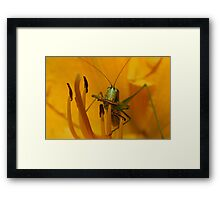 Corn On The Cob - Catydid Framed Print