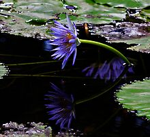See my reflection by Coriena