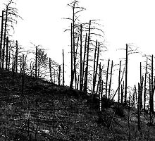 burnt trees on hill by Michael Quiros