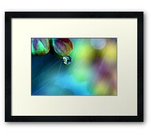 Rainbow Web Framed Print