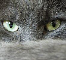 cats eyes by theresa knox