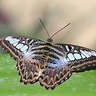 Flutter by by John Banks