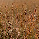 Flax in Sun by middleofaplace