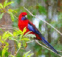 PhotoImpression :: Crimson Rosella 1 by Imageo