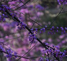 Hope in the Redbud Trees by Ann Eldridge