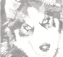 Siberian Husky Dog Drawing Ebony Pencil my Koga by Joseph Ludens