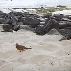 sand bird wandering by jlipton