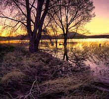 Sunset Trees by Bob Larson