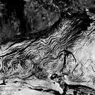 Wood Grain-Mariposa, Ca by Alan Brazzel