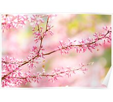 pinky spring Poster
