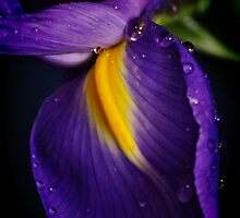 Purple Rain by Barbara  Brown