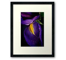 Purple Rain Framed Print