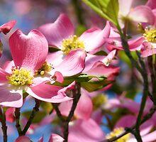 """ The Pinkest Sunshine Ever "" by franticflagwave"