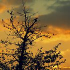 The sunset and the bird... by Nuh Sarche