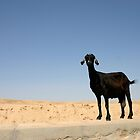 tunisian goat by churros
