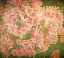 Vintage Azaleas by Jonicool
