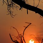 Sunset silhouette of a leopard lazing in a marula tree by John Banks